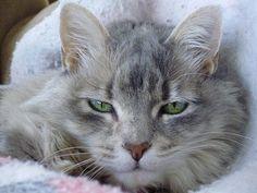 My furry girl Miss Mo.  Why did you wake me?