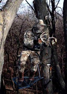Bow hunting  | Whitetail Deer Bowhunting | Big Game Hunt