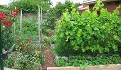 My Garden - fantastic urban food forest!