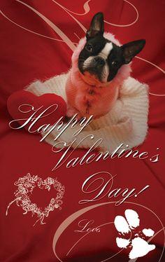 Boston Terrier, Valentine, Heart, Love