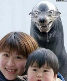 "Mah Rape Face. For more funny pictures, click on my name!.. Asian woman: ""We wanna take a picture next to the sear!"" Seal: ""I hope you taste like what you eat, cuz i want sum fukin sushi!"""