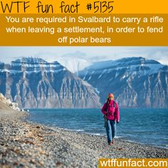 You have to carry a rifle in Svalbard - WTF fun facts
