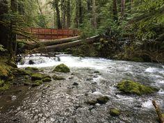 Lower Big Quilcene by Blazen. River Trail, Hiking Backpack, Campsite, Garden Bridge, Wilderness, Winter, Backpacking Trips, Outdoor Structures, Big
