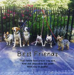 """Best friends . . . They know how crazy you are, and still choose to be seen with you in public."" Happy Friday, friends!  #friendship #walkinwheels #handicappedpets #inspirationalquotes"