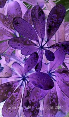 "painterrific: This is a picture of my mom's plant. I edited the original photo with a ""negative"" photo filter on my phone to change the colors. I love purple :-)"