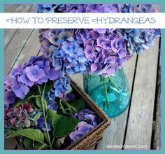 How To Preserve Hydrangeas