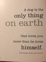 Discover and share Dog Lovers Quotes. Explore our collection of motivational and famous quotes by authors you know and love. Dog Quotes, Funny Quotes, Life Quotes, Animal Quotes, Great Quotes, Quotes To Live By, Inspirational Quotes, Motivational, English Frases