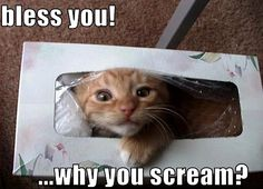 awww... the sad thing is if my cat could fit in a tissue box i could TOTALLY picture him doing this