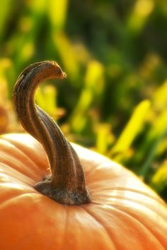Twisted Pumpkin Stem by ~torchdesigns on deviantART where can i get these handles?