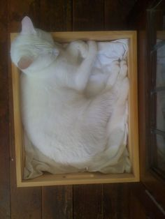That's how my cat sleeps. -----------------------------Funny, mine too. She also looks like this one.