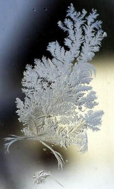 window ice flower