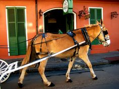 New Orleans Carriage Horse