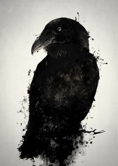 Displate Poster The Raven raven #crow #bird #animal #prey #wildlife #nature #outdoors #mythology #norse #pagan #viking #photomanipulation #spatter #ink #oden #odin #hugin #munin #huginn #muninn