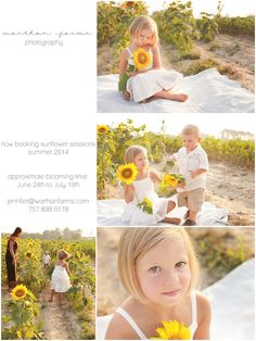 I am scheduling now for Sunflower Sessions (2 acres of sunflowers!) this summer - choose between a full or petite session. These sessions do require flexibility in your schedule due to the unpredictable nature of the sunflowers' peak time.  See my website under Session Information for pricing and the booking form: http://thecottonwife.com/