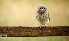 Photograph will you please FEED ME!! by Mark Bridger on 500px
