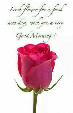 good morning greetings \ good morning quotes + good morning + good morning quotes for him + good morning quotes inspirational + good morning wishes + good morning beautiful + good morning quotes funny + good morning greetings Good Morning Beautiful Lady, Good Morning Roses, Good Morning My Love, Good Morning Funny, Good Morning Picture, Good Morning Friends, Good Morning Messages, Morning Pictures, Good Morning Images