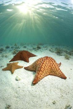 étoiles de mer  byFederico Cabello
