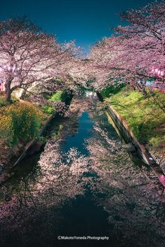 Tokyo Cherry Blossom, Japan by Makoto Yoneda Japanese Photography, Landscape Photography, Nature Photography, Japanese Nature, Japanese Landscape, Cherry Blossom Japan, Cherry Blossoms, Beautiful Places In Japan, Japan Travel Guide