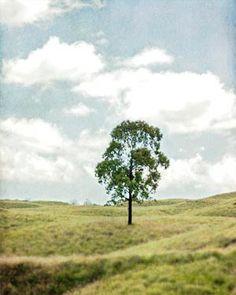 Tree Photo Nature Photography Tree by Maddenphotography