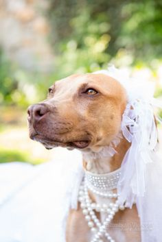 Have your dog at your wedding. Elizabeth Victoria Photography