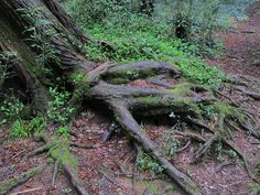 The roots of the tree that hold herself to Life