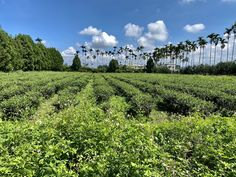 If natural farming methods combined with health and well-being go hand-in-hand with your love for tea, you will enjoy learning about this tea and the story behind it. Tea Club, Natural Farming, Take Five, Types Of Tea, Oolong Tea, Brewing Tea, Ecology, Learning, Health