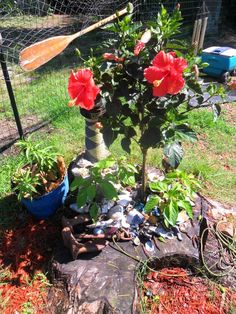 Does Dad have an old stump that is an eyesore?   Turn it into a pretty garden for his enjoyment!