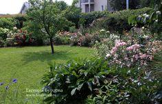 Розы в саду, создание и обустройство розария, розовый сад или жизнь в розовом цвете, фотогалерея