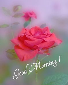 Good Morning Monday Images, Good Morning Love Messages, Good Morning Cards, Cute Good Morning, Good Morning Texts, Good Morning Greetings, Morning Qoutes, Good Morning Beautiful Flowers, Good Morning Roses