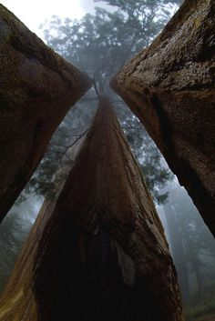 8 Jaw Dropping Photographs of California's Giant Redwoods and Sequoias