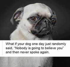 What if your dog said...