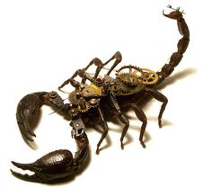 Les insectes mécaniques | Curiocity