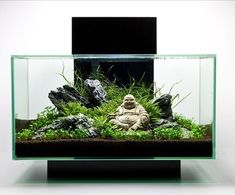 If you anticipate building an aquarium, please make sure that you get your fish supply from a spot that genuinely cares about animal health. An aquarium has to be maintained regularly to be certain that the fish are kept healthy. Aquarium Design, Home Aquarium, Nature Aquarium, Saltwater Aquarium, Aquarium Fish Tank, Freshwater Aquarium, Biorb Fish Tank, Aquascaping, Aquarium Terrarium