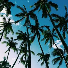 Imagen de summer, palm trees, and sky Summer Sky, Summer Dream, Summer Breeze, Summer Of Love, Summer Vibes, Spring Summer, Good Vibe, No Bad Days, Palmiers