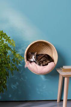 Basket - - Katzen -Cat Basket - - Katzen - 🕺A funky session in the Adventure Tent. Cradle modular wall mounted cat furniture by Urban Feline Kittens Cutest, Cats And Kittens, White Kittens, Kitty Cats, Dog Pitbull, Cat Basket, Gatos Cats, Cat Room, Cat Crafts