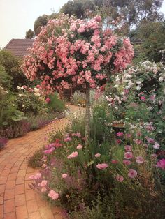 I'm not sure what I like better...the path or the rose topiary