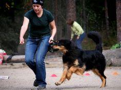 Palkitsemiseen perustuva koulutus on koiralle mieluisaa