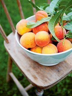 Eat A Peach, Apricot Tree, Farmers Market Recipes, Herb Bread, Eat Seasonal, Peach Trees, Fruit In Season, Summer Fruit, Simple Pleasures