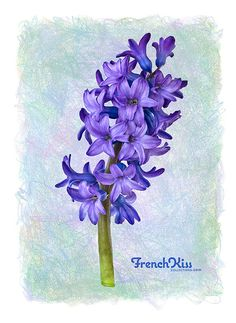Image result for watercolor hyacinth