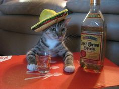 23 Cats Looking Adorable In Mariachi Hats