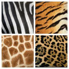 textuur van dierenvachten: zebra, tijger, giraffe, jaguar. ze voelen zacht en harig aan