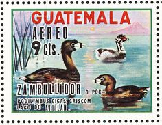 Atitlan Grebe stamps - mainly images - gallery format