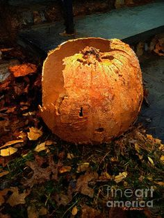 """""""The Pumpkin Shell"""" ~ © 2015 RC deWinter ~ All Rights Reserved"""