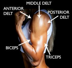 At-home workout with dumbbells to tone and tighten your arms! 6 of the best exercises to sculpt lean muscle in your biceps, triceps, and shoulders. Good Arm Workouts, At Home Workouts, Workout Routines, Workout Ideas, Body Workouts, Workout Plans, Weight Training Programs, Workout Programs, Coaching