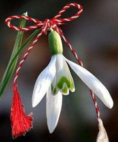 Martisor, A Spring Welcoming Romanian Tradition Good Morning Picture, Morning Pictures, Christmas Scenes, Christmas Ornaments, 8 Martie, Pretty Phone Wallpaper, French Flowers, Fall Plants, Happy Spring