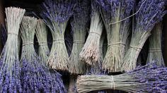 A new study claims that the scent of lavender helps promote interpersonal trust. PBS.org