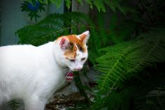 Cats, Photography, Animals, Cordial, Gatos, Photograph, Animales, Kitty Cats, Animaux