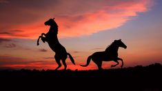 Horses in silhouette
