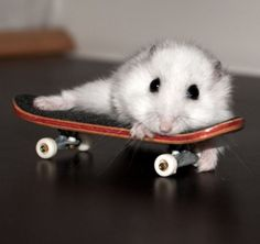 cute skateboard memes | tags cute pictures funny cute pic funny cute pics hampster hampster