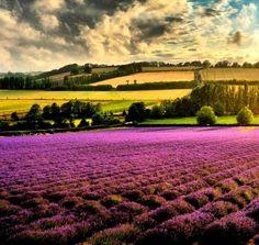 Lavender season lends Provence a stunning landscape.